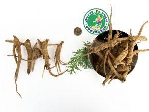 5lb - 3Yr Ginseng Roots